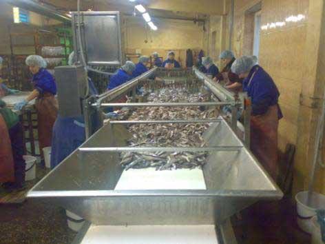 Производим обоурудовании и линии для производства шпрот и других рыбных консервов.