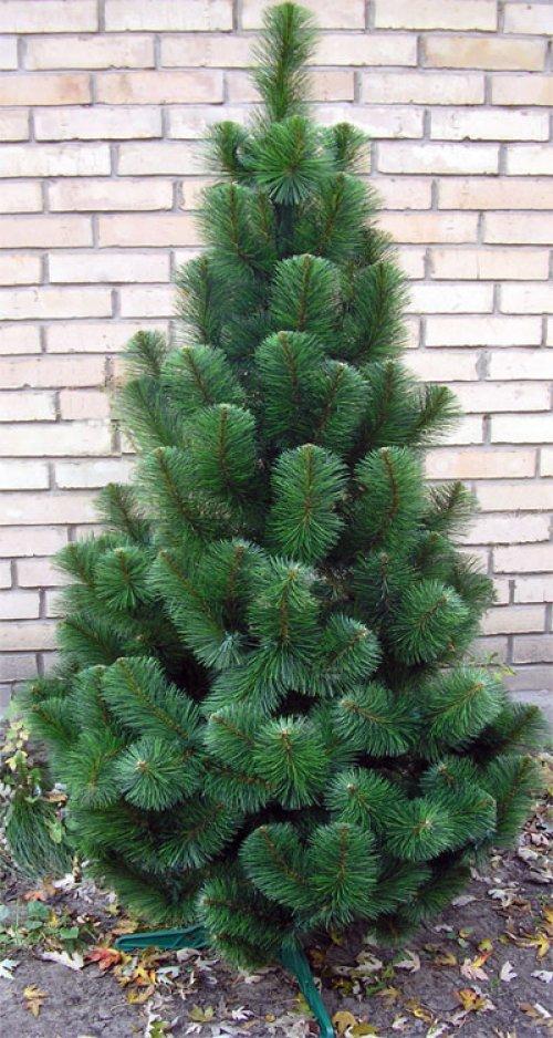 Сосна искусственная новогодняя зеленая 1.50 м.