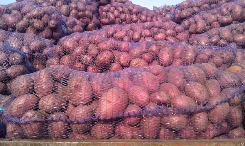 Картофель оптом Ред Скарлет калибр 5 цена 13 рубкг