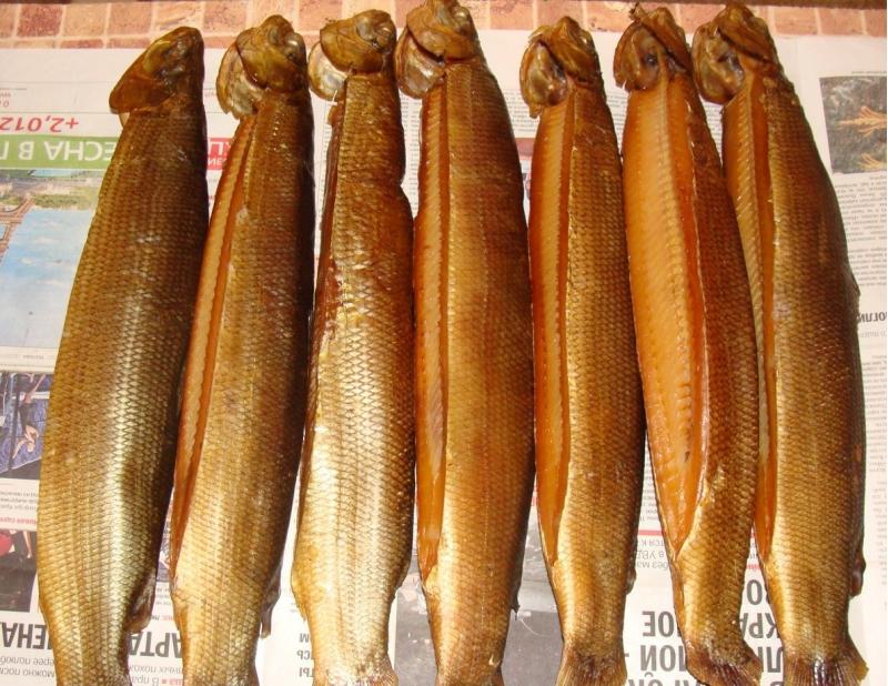 Северная рыбка. Чир, Муксун, Нельма