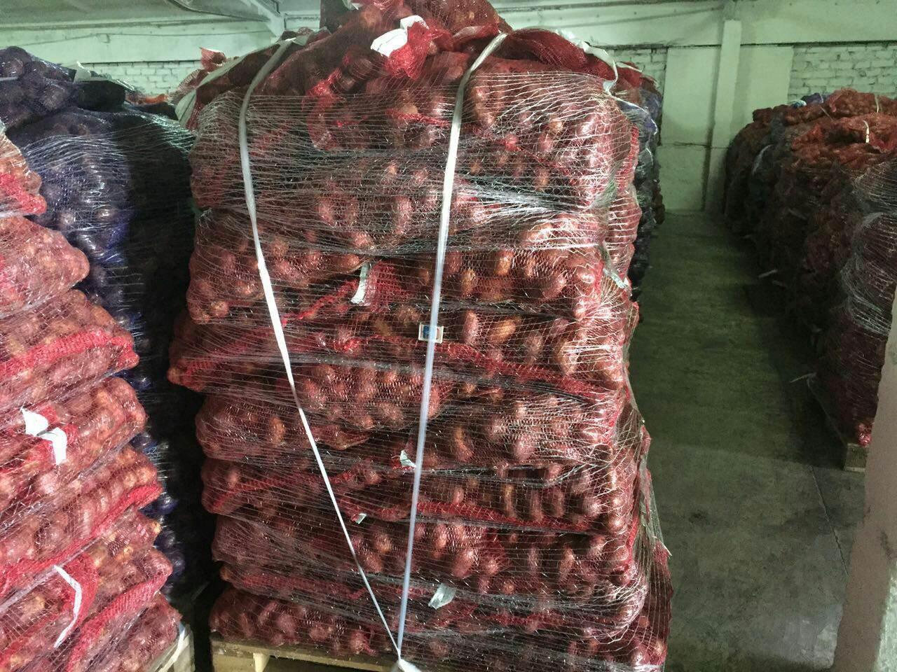 Картофель оптом Ред Скарлет калибр 5 цена 11 рубкг.