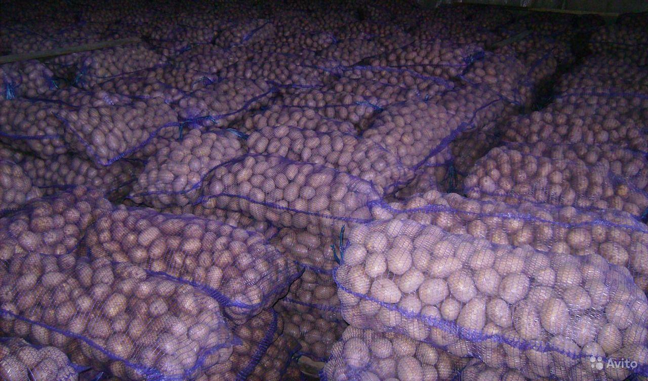 Картофель и другие овощи из Беларуси оптом