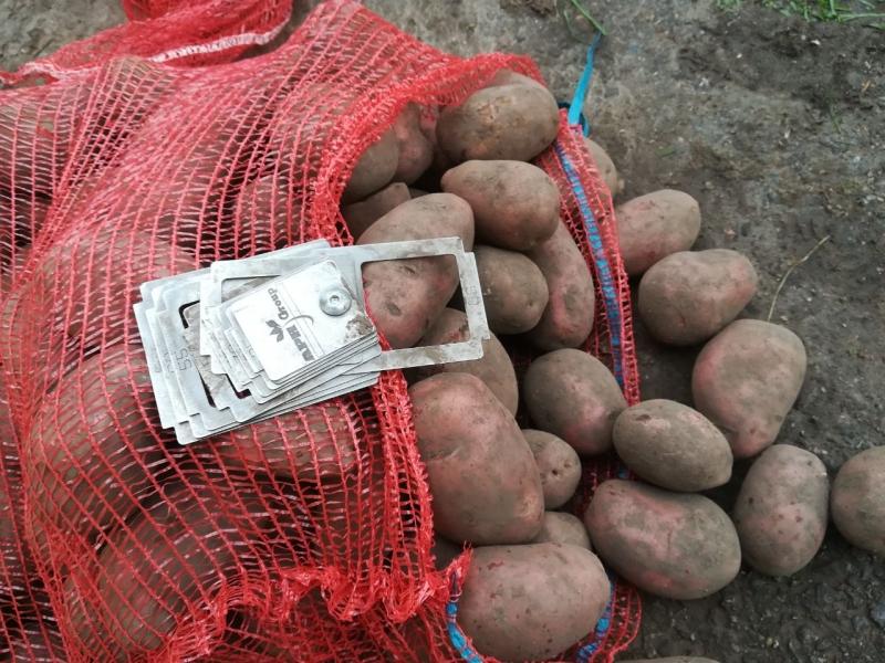Картофель оптом Журавинка калибр 5 цена 11,5 рубкг