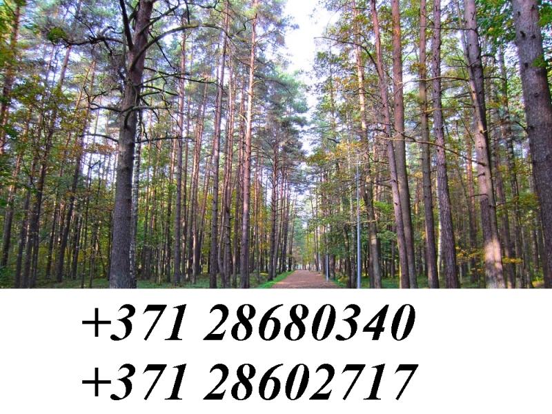 покупаю лес в Латвии