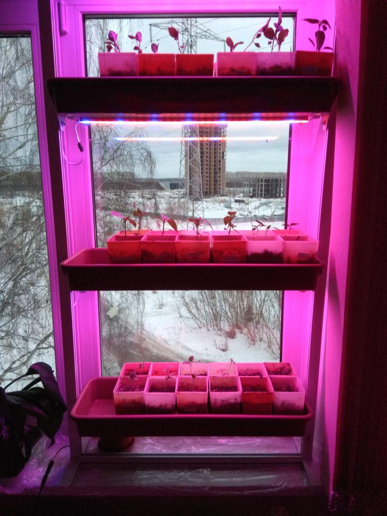 Фитоcтойка для рассады, комнатных растений, зелени