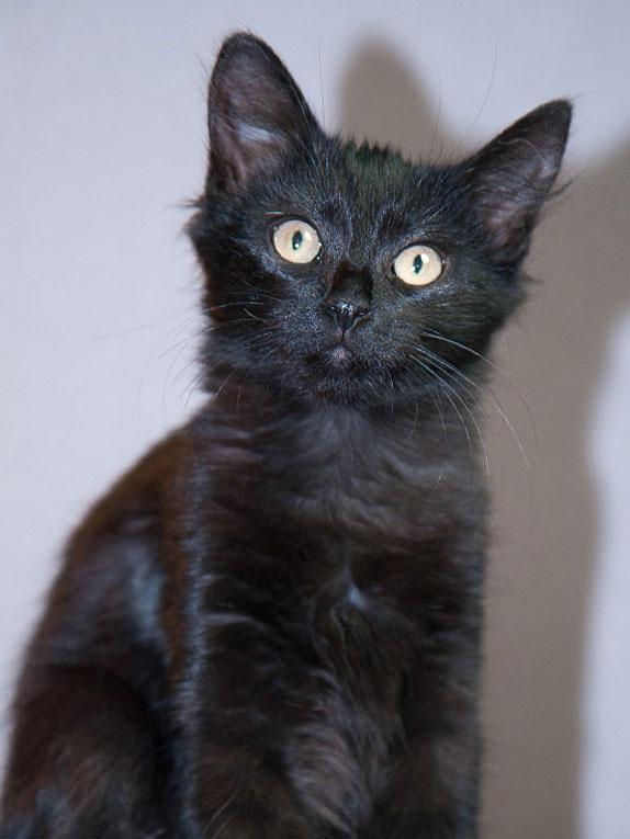 Чрный котик Норик в добрые руки